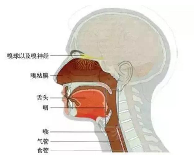 鼻整形前听韩国知名医生讲做假体隆鼻会影响嗅觉吗?